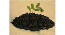 Biochar, a new solution to reduce global ...