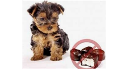 Why Theobromine is Toxic to Dogs and Other Pets?
