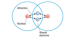 Points You Should Remember About Covalent Bonds