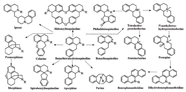 Everything about Alkaloids