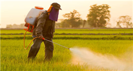 Agrochemicals: Types and their effects