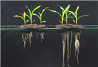 Microbes for better harvests