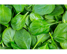 A cell in spinach uses sunlight to produce electricity: research