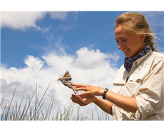 LSU graduate student Allison Snider conducts research on Seaside Sparrows that reside in Louisiana marshes year-round. New research shows Deepwater Horizon oil in these native birds.