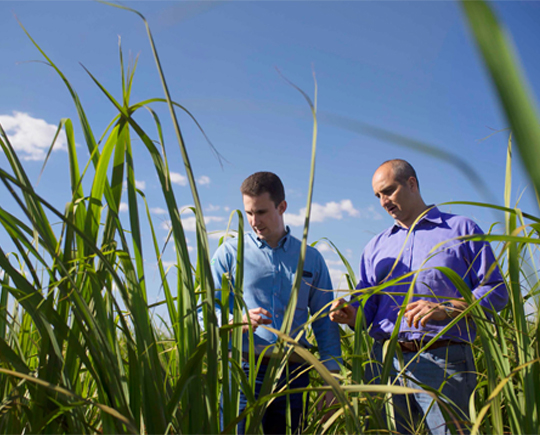 Bayer, Mitsui Chemicals ink license agreement novel fungicide