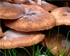 Fungal enzymes could hold secret to making renewable energy from wood