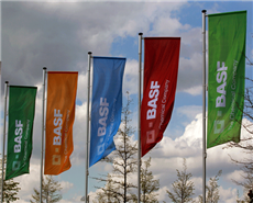 Flags of BASF are pictured in Monheim. (File Photo)