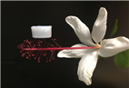 New ultra-lightweight ceramic aerogel withstands extreme temperatures