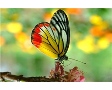 Researchers mimic the colour and texture of butterfly wings