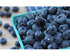 Blueberries don't improve night vision, finds new study