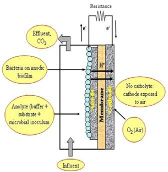 benefits of microbial fuel cell A microbial fuel cell is a device where the bacteria can grow on one electrode, they breakdown organic matter and release electrons from it the bacteria can do this by keeping them separate from.