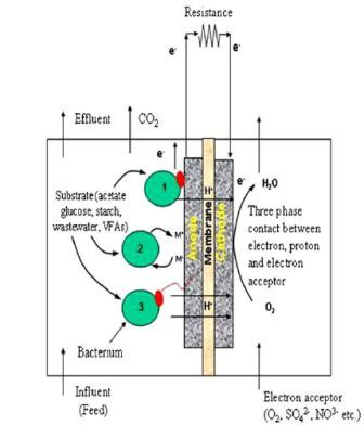 Two chamber MFC microbial fuel cells converting chemical energy into electrical energy